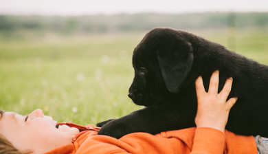 black gap labs puppy on belly